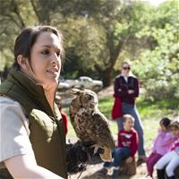 Naturalist Nicole presenting the Great Horned Owl